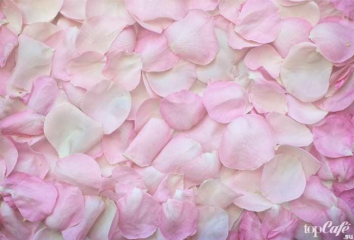 розовый. CC0