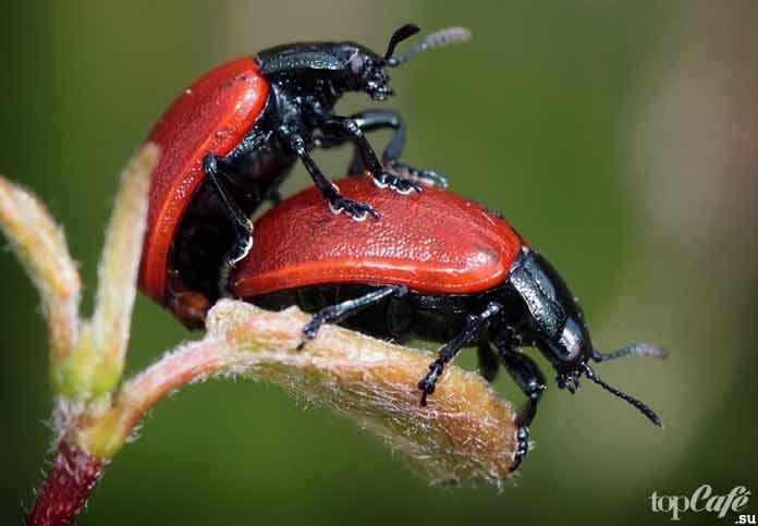 Способы защиты животных от паразитов: Спаривание. CC0