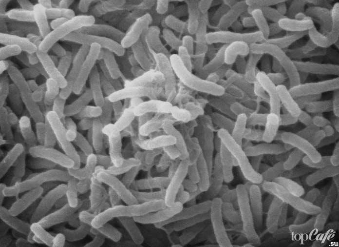 Vibrio cholerae. CC0