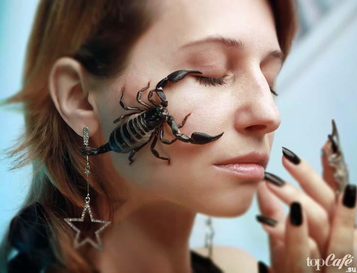 Скорпион. CC0