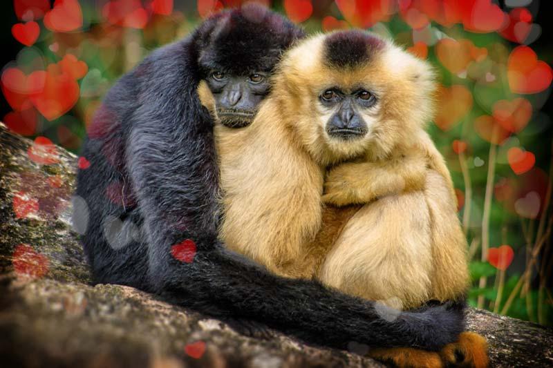 Самые романтичные животные. CC0