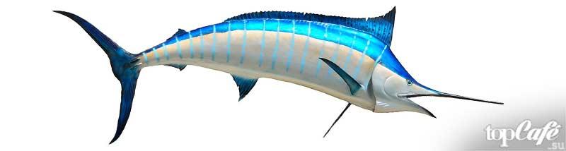 Рыба Парусник. CC0